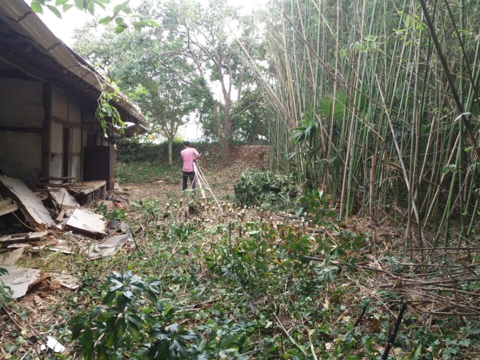 시골집 리모델링과 한옥 리모델링시 건물의 수명을 망가뜨리는 주변의 상황중 대나무 밭이 있는 건물은 피해야 하는 이유는 대나무 뿌리로 인하여 건물에 치명타를 입히기 때문이다