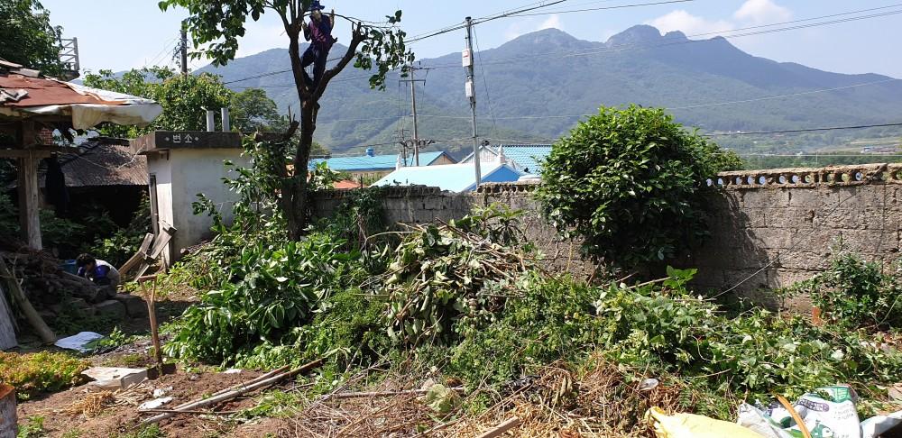 주변의 나무들도 베고나니 치울것들이 한정없이 쏟아져 나온다 촌집수리하는것은 일반 주택수리나 집수리 하는일 보다 엄청난 집중이 필요하다 그렇게 촌집 리모델링 작업이 피치를 올린다